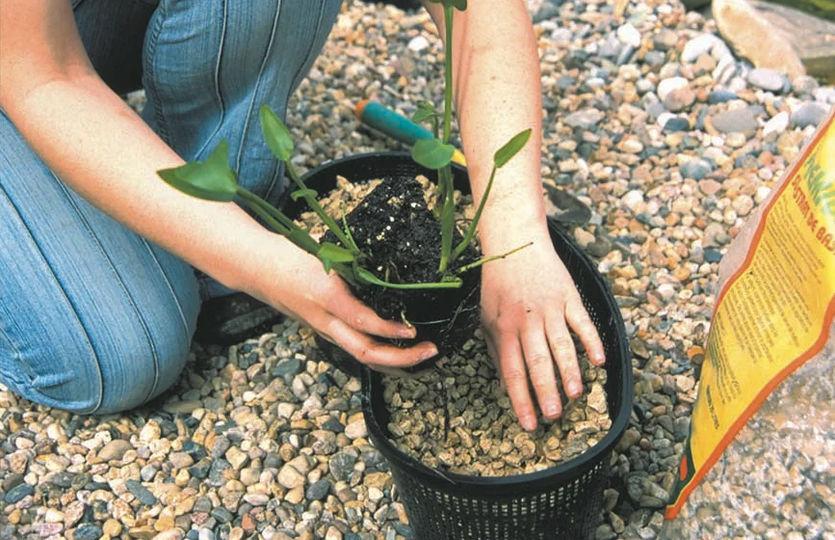 Cestos para plantas de estanque-2