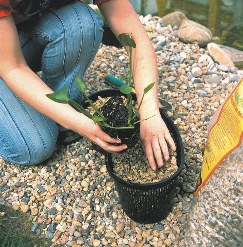 Cestos para plantas de estanque