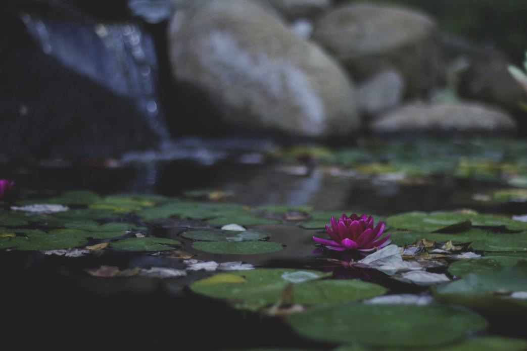 Pond Creation Tutorial