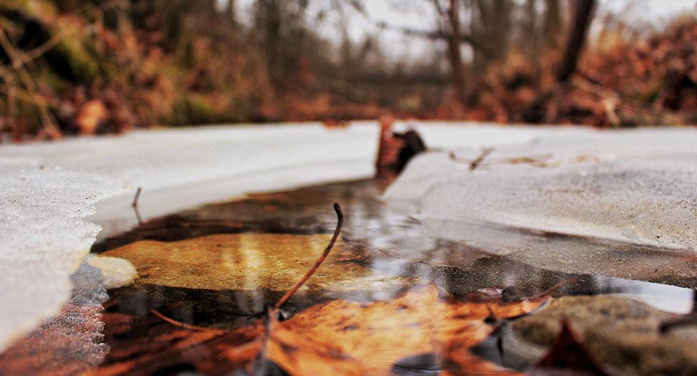Mantenimiento-de-estanques-en-invierno