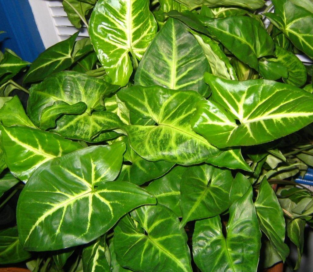Plantas sumergidas