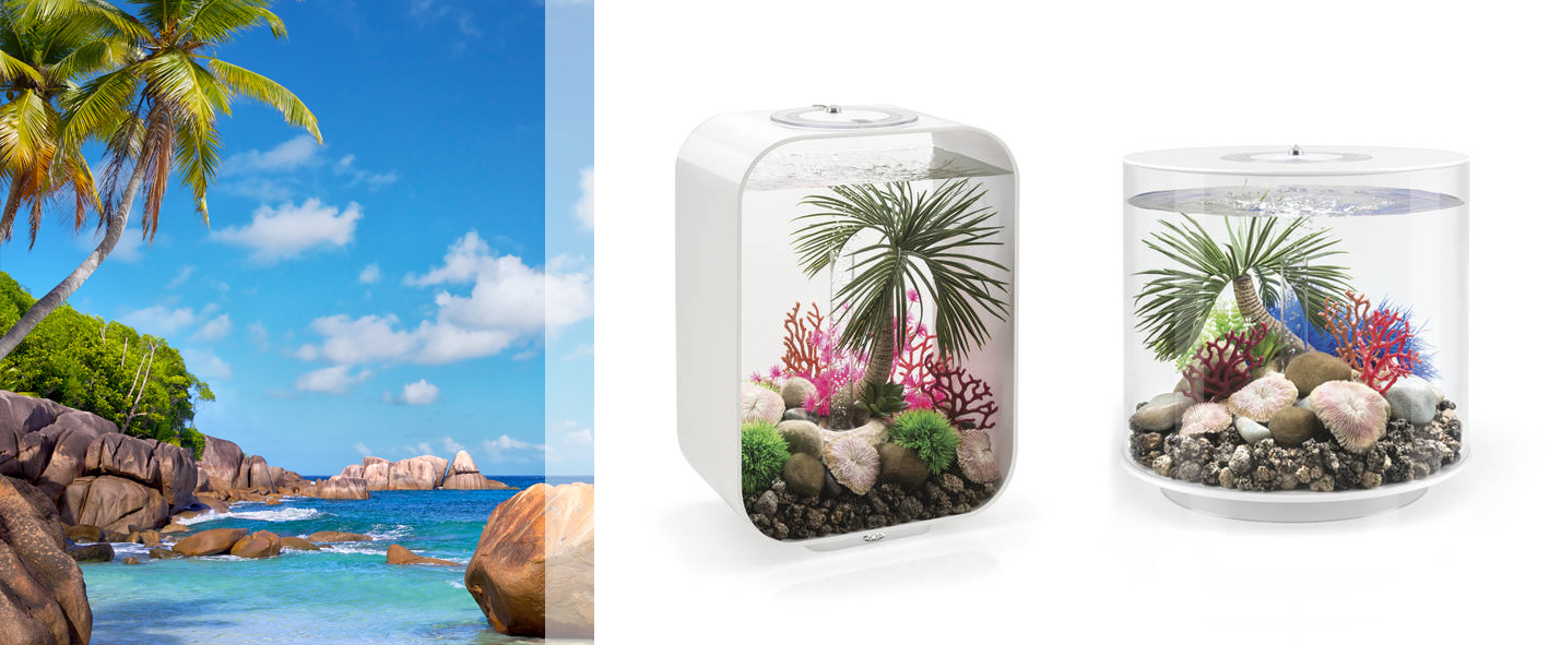 Nueva decoración Seychelles
