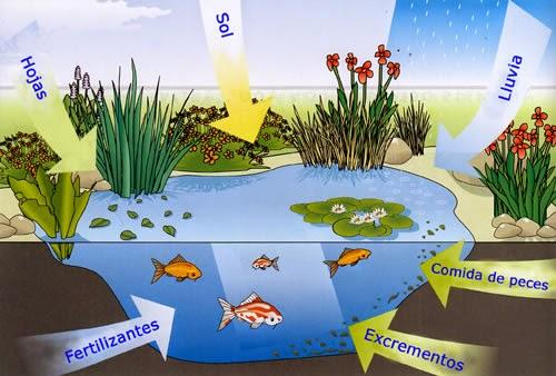 Programa para el cuidado del estanque